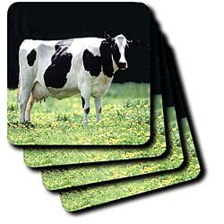 Holstein Cow - Set Of 4 Coasters - Soft
